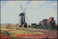 Tulip Fields With The Rijnsburg Windmill 4x6